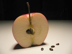 Festa della mela in Val di Non